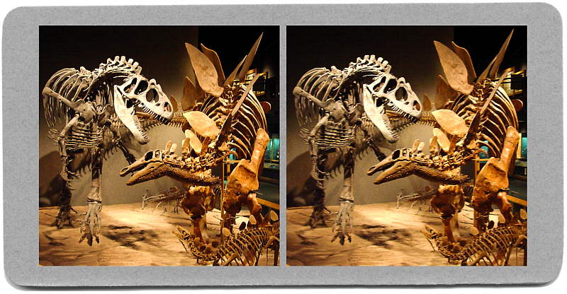 Fighting Dinosaurs in Natural History Museum, Denver, CO - 2001 - Stereoview